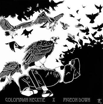 colombian necktie pigeon down