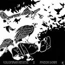 colombian necktie pigeon down_130
